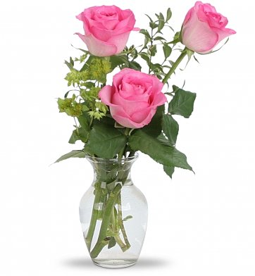 Flower Delivery Philadelphia on Delicate Rose Trio  Roses   Three Roses Beautifully Presented In A Bud