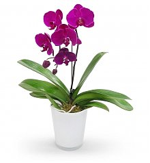 Home Decor: Pink Punch Orchid