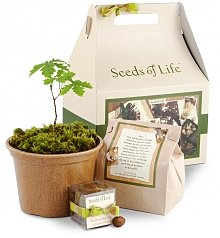 Home Decor: Seeds of Life Oak Tree Kit