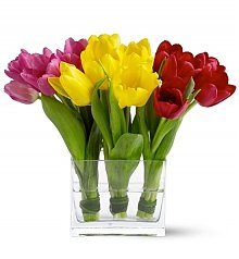 Flower Bouquets: Fresh Tulip Trio